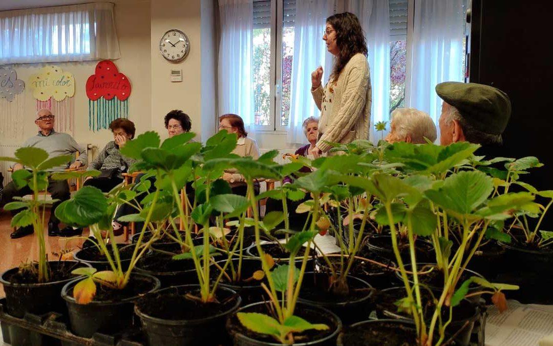 #VigilantesDelAire en Aragón: crónica del reparto de plantas en Zaragoza el 12/11/2019